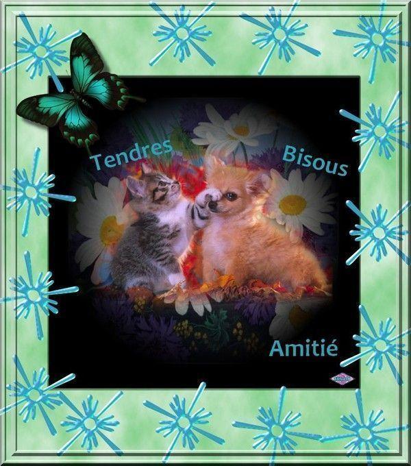 """""""Tendres bisous. Amitié"""" - Chiot, chaton et papillon..."""