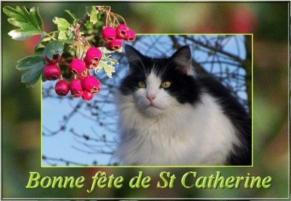 """""""Bonne Fête de St Catherine""""..."""