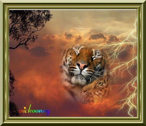 Tigres au coucher du soleil - Merci... SUZANNE...