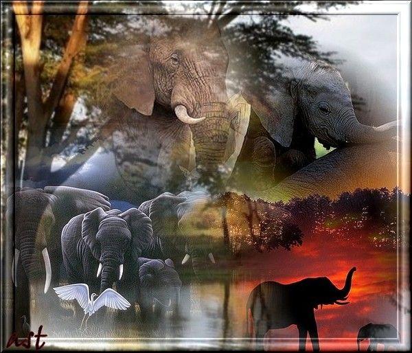 L'Afrique des éléphants...