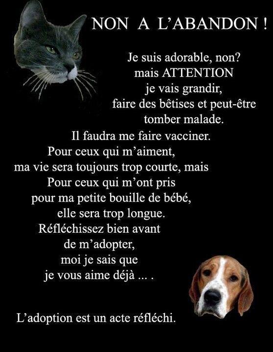 """""""Non à l'abandon!... L'adoption est un acte réfléchi""""..."""