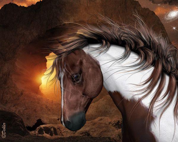 Un magnifique cheval bicolore sur un coucher de soleil...