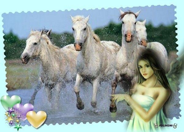 Les chevaux de BRIGITTE/FLEUR DE LYS...