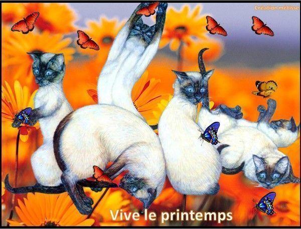 """""""Vive le Printemps"""" avec les chats de SYLVIE/METISSE..."""