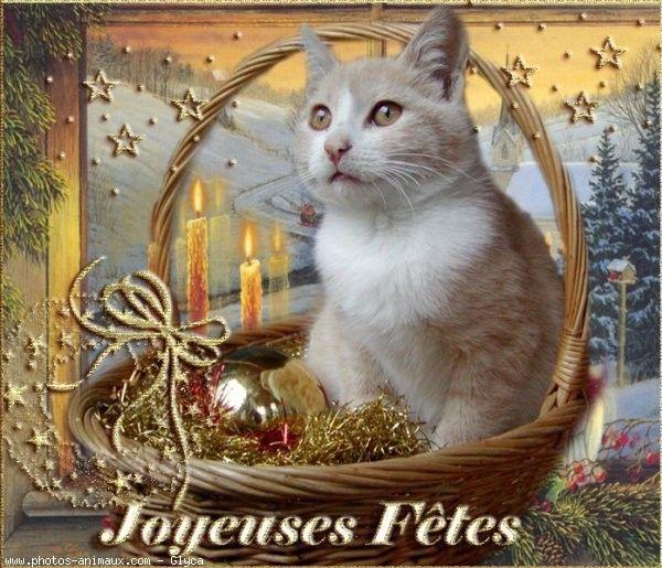 \u0026quot;Joyeuses Fêtes\u0026quot; , Chat dans le panier de décors de Noël