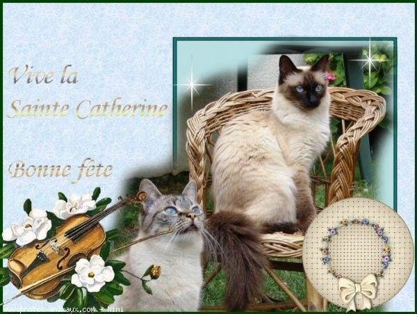 """Vive la Sainte Catherine Bonne Fête""..."